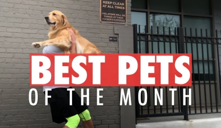Best Pet Videos of the Month | October 2017
