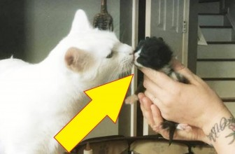 Cat Addicted To Helping Other Kittens In Need