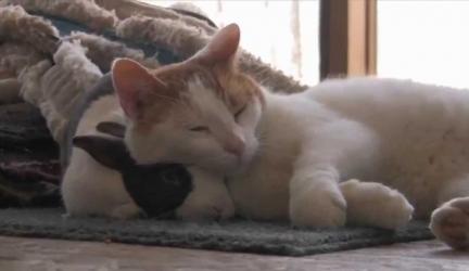 Cat & Bunny Best Friends