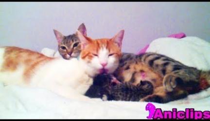 Cat Daddy Supports Mama Cat Takes Care of Her New Born  Kitten