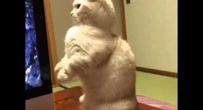 Cat Ejects CD Rom – Best Vines Ever