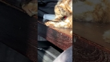 Cat Having Fun In The Sun Video
