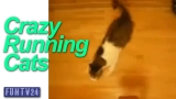 Cat Running – running cats – kitten runs around like crazy