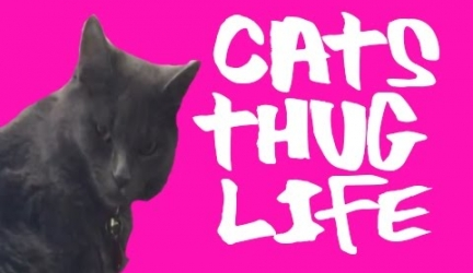 Cat Thug Life – Ultimate Cats Thug Life Compilation!