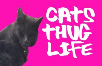 Cat Thug Life – Ultimate Cats Thug Life Compilation!