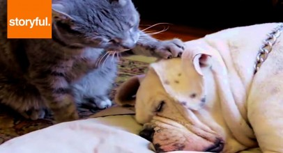 Cat Tries to Wake Dog