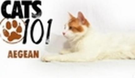CATS 101-Aegean