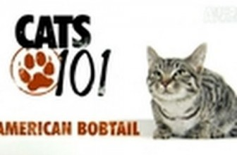 CATS 101-American Bobtail