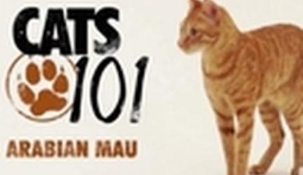 CATS 101-Arabian Mau