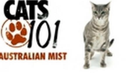 CATS 101- Australian Mist