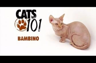 CATS 101 – Bambino