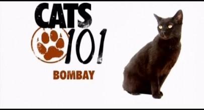 CATS 101 – Bombay