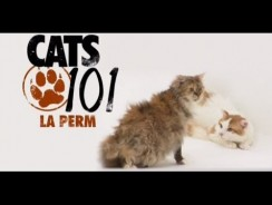 CATS 101 – Devon Rex