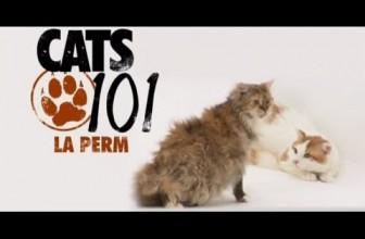 CATS 101 – Devon Rex