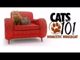 CATS 101 – Domestic Housecat