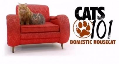 CATS 101 – Domestic Housecat