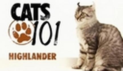 CATS 101-Highlander
