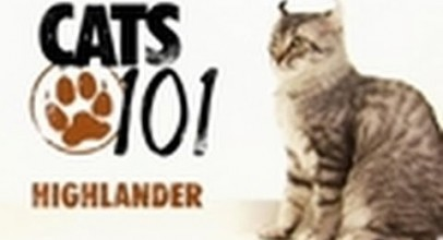 CATS 101-Highlander