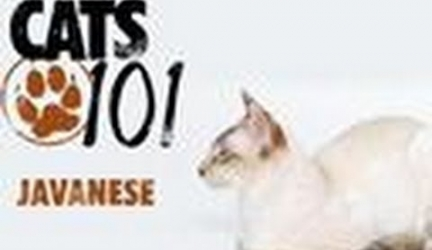 CATS 101- Javanese
