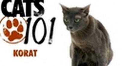 CATS 101- Korat