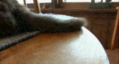 CATS 101 – Manx