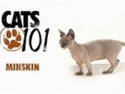 CATS 101- Minskin