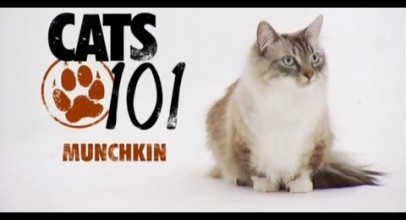 CATS 101 – Munchkin
