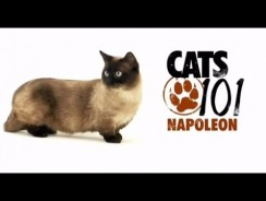 CATS 101 – Napoleon