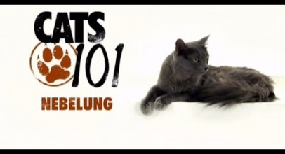 CATS 101 – Nebelung