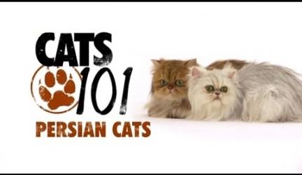 CATS 101 – Persian