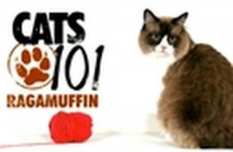 CATS 101- Ragamuffin