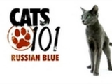 CATS 101 – Russian Blue