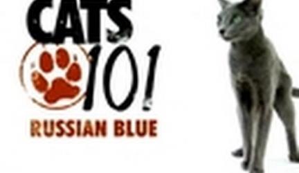 CATS 101 – Russian Blue