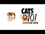 CATS 101 – Scottish Fold