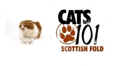 CATS 101 – Scottish Fold