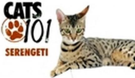 CATS 101- Serengeti