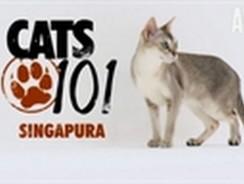 CATS 101 – Singapura