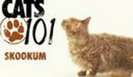 CATS 101-Skookum