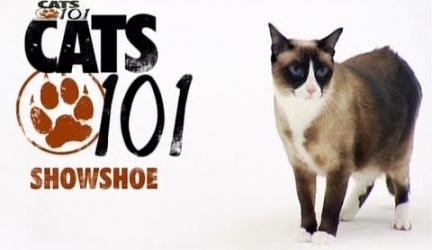 CATS 101 – Snowshoe