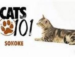 CATS 101- Sokoke