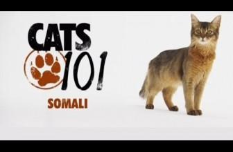 CATS 101 – Somali