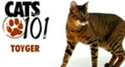 CATS 101- Toyger
