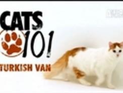 CATS 101: Turkish Van