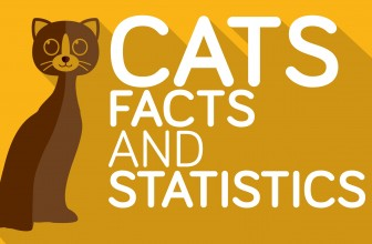 Cats: 18 Interesting and Funny Cat Facts You Didn't Know