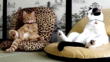 Cats Acting Like Humans Are So Funny – Best Video Compilation Of Cats Behaving Like  Humans