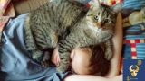 Cats Alarm Clocks – Cats Waking Up Their Owners Part 1