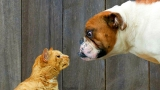 Cats And Dogs Collide Video