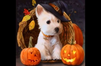 Cats and Dogs in Halloween Costumes Videos 2017