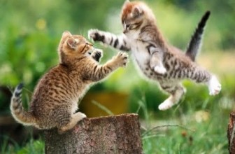 Cats chasing and playing with each other