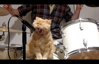 Cats & Dogs Singing With Their Owners